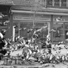 Zahllose Tauben bevölkern diesen gemütlichen Platz in der Altstadt und werden von Einheimischen wie Besuchern gerne gefüttert. Während sie tagsüber mitunter etwas omnipräsent wahrgenommen werden, sind sie mit Einbruch der Dunkelheit bis zum nächsten Tag spurlos verschwunden.
